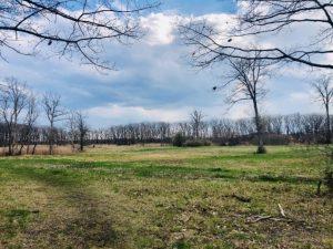 Rowley's Rough Meadows Wildlife Sanctuary in Spring.