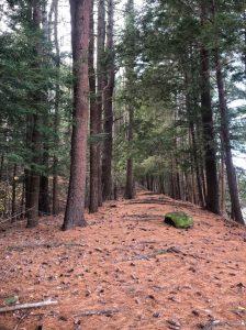 Bradley Palmer State Park on the Topsfield/Ipswich line.
